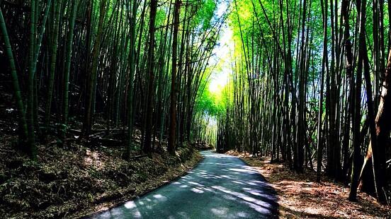 不用飛日本,台灣也有媲美嵐山的「絕美竹林」!長2公里小徑宛如走進電影《臥虎藏龍》,還能賞漫天螢火蟲