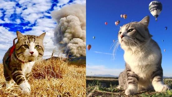 跟著「喵吉」玩日本!貓界帥氣KOL瀟灑出遊照夯到出寫真集,貓奴們必追蹤IG啊~