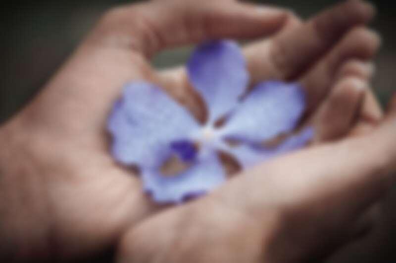 嬌蘭多年來復育的珍稀蘭花