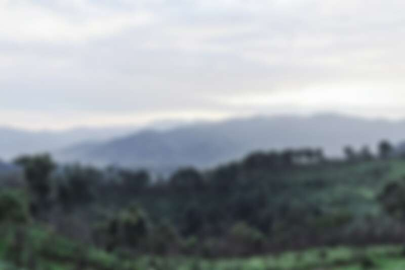 嬌蘭多年來為了復育珍稀蘭花,竟在雲南深耕多年,重建雨林生態系統並保護、復育瀕危植物