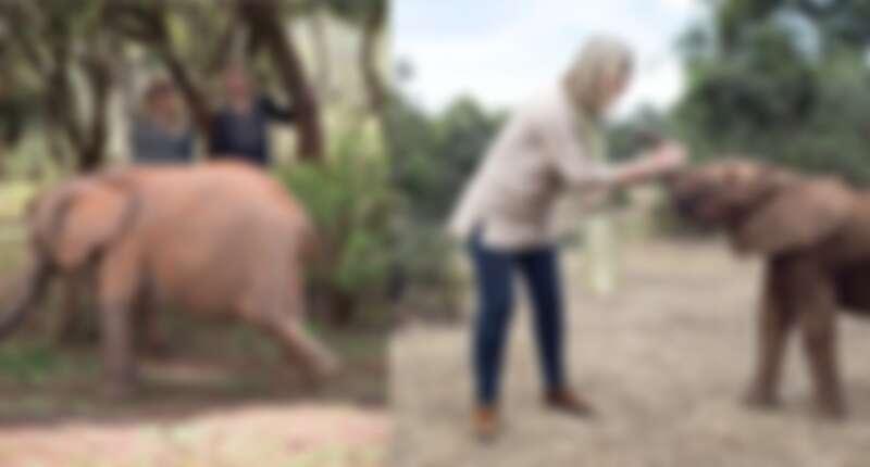 Chantecaille香緹卡創辦人Sylvie&非洲孤兒象