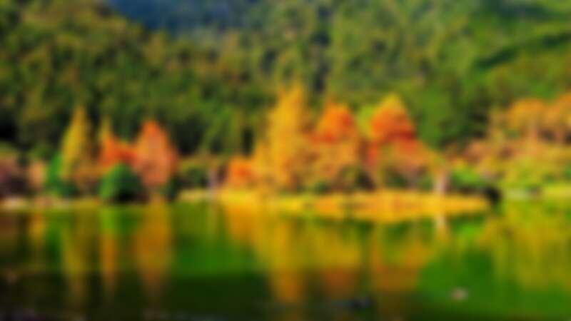 ♛明池國家森林遊樂區的楓葉美景令人屏息!此為2018年11月景色