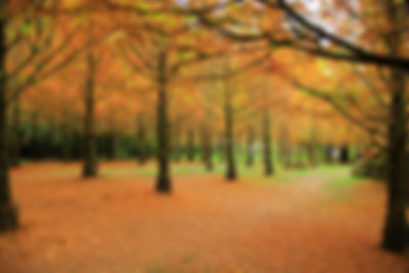 衫林溪森林聲帶度假園區裡的水杉