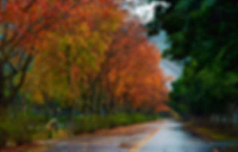 石門水庫裡的「楓林步道」根本是電影場景