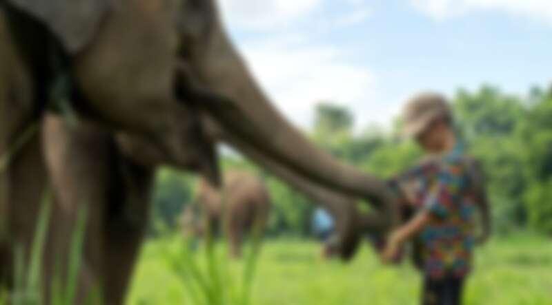大象保護區