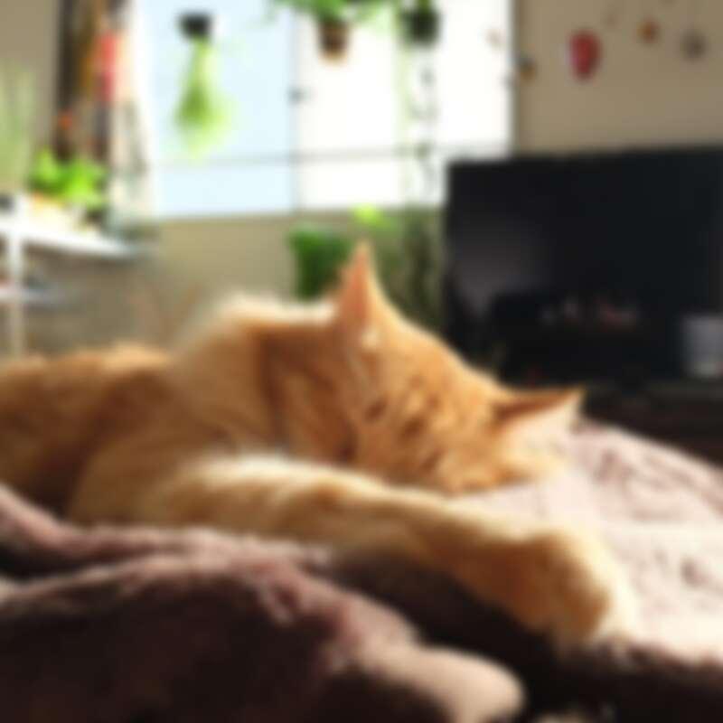 IG@tumbler3.cat