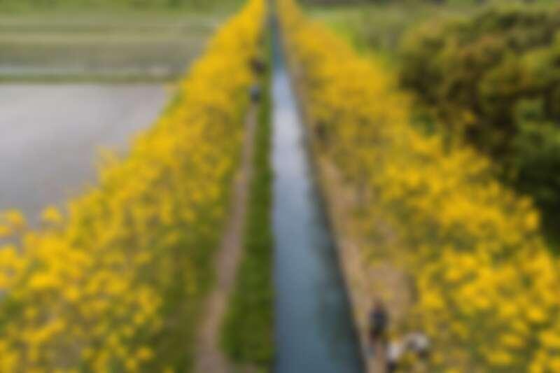 圖片來源:花東縱谷國家風景區