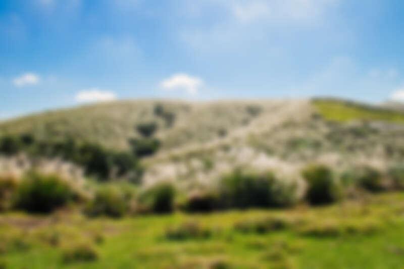 擎天崗的芒草季景色。圖片來源:flickr CC / Paul Chan
