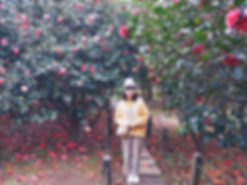 花卉試驗中心的茶花景色。圖片來源: IG @happyabby_ 授權