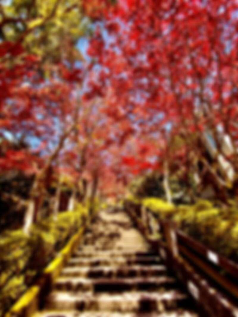 這條「楓紅階梯」叫人流連忘返!