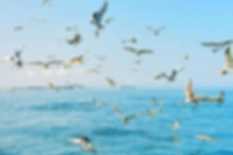 龍蝦島旅程,帶你前往雞善嶼餵食海鷗。Source: KLOOK