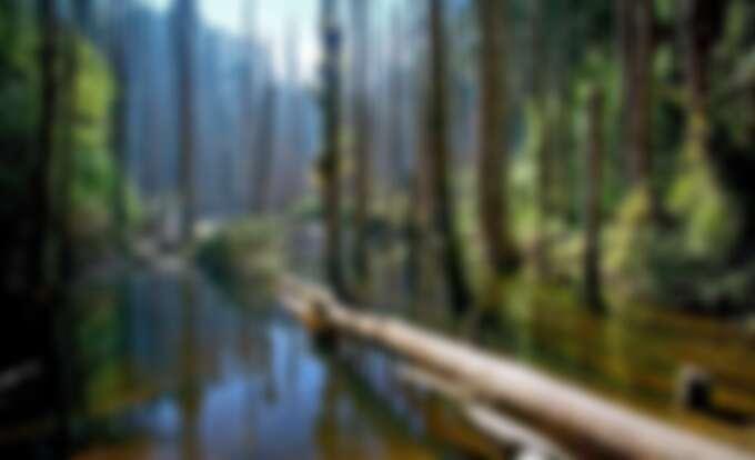 杉林溪忘憂森林一日遊-忘憂森林。Source: KLOOK