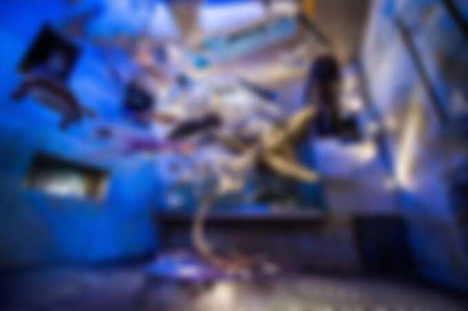 台南左鎮化石園區-早坂中國犀牛亞種化石。Source: KLOOK