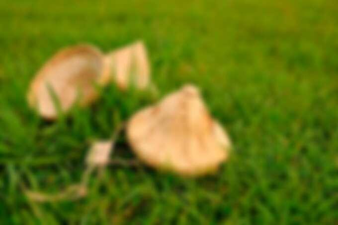 親眼看見每一粒米從農田到餐桌的過程。Source: KLOOK