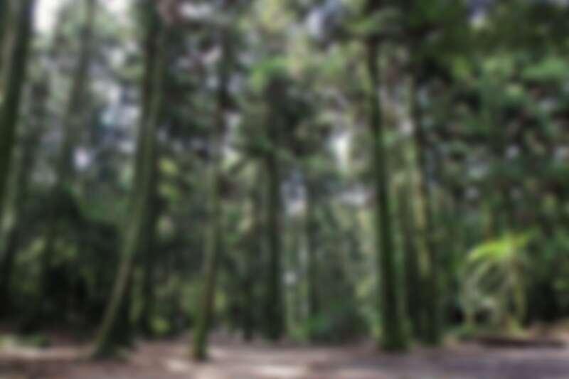小溪頭黑森林
