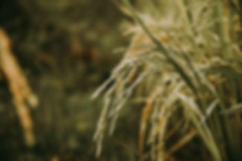 米種也是影響清酒風味的關鍵!