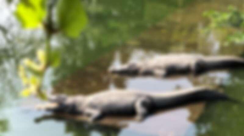 不一樣鱷魚休閒農場
