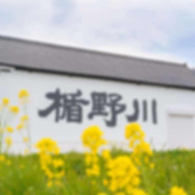 楯野川酒造有著180年的歷史。