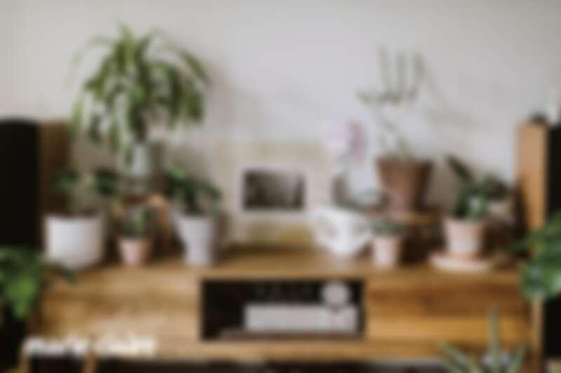 廳是家中很重要的植栽陳列空間,每隔幾天都會更換不同的品項,依照心情或是想嘗試的風格做變動,很鼓勵大家透過調整植栽位置觀察植物生長的姿態,感受它們生長線條,這個過程能美化空間外,也是訓練美感的一種方式。
