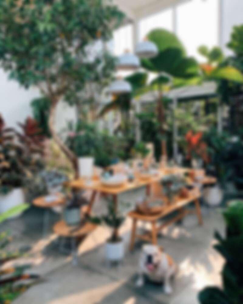 最美的植物專賣店。