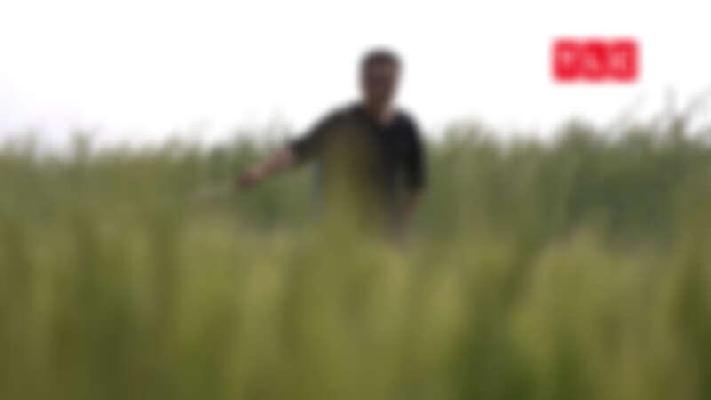 陳子育堅持不打農藥、不用化肥,用環保肥料強化土質,以最自然的方式對待土地。