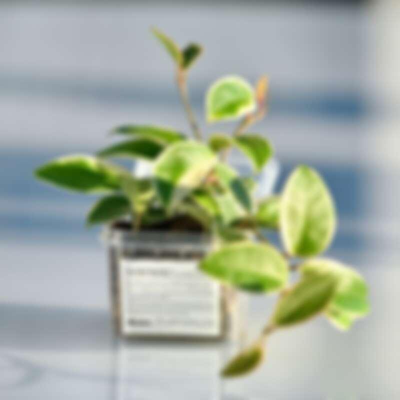 Davines 特芬莉髮膜使用食品級塑料,可用於微波爐加熱,使用後的空盒也可種植花草。
