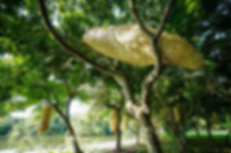 縱谷大地藝術季-漂鳥197 徐暋盛作品 《蛻變前的等待》
