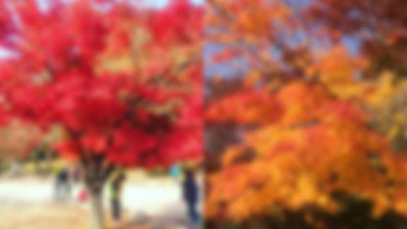 韓國雪嶽山每到秋天就是賞楓勝地。