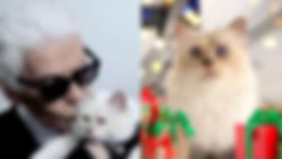 卡爾拉格斐無極限寵愛貓Choupette:搭私人飛機、專屬女傭照顧、使用全球第一把Dyson吹風機...