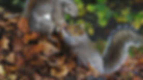 看見大自然的野生魅力!公視「動物秘密一籮筐」紀錄片,派出動物間諜也太可愛了吧!