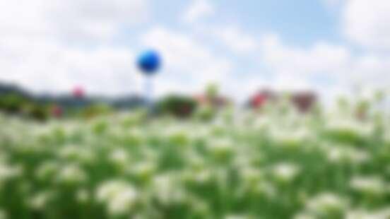 【桃園景點】大溪正下著「夢幻九月雪」!400公頃韭菜花田交織成唯美風景,潔白浪漫花海只綻放一個月