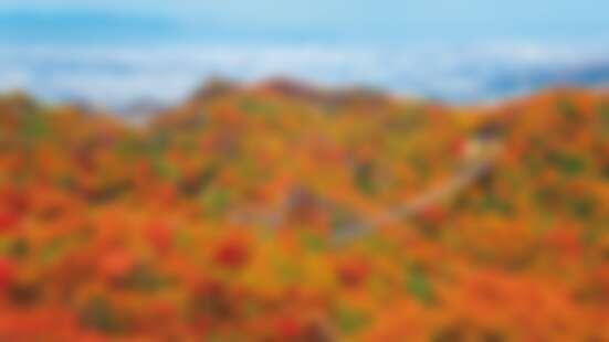 【MiKU玩日本】關西大阪賞楓秘境「星田園地」,走在日本最大的吊橋「星之鞦韆」上欣賞紅葉絕景
