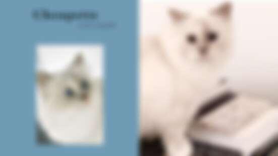 由老佛爺親自掌鏡!卡爾拉格斐愛貓Choupette即將推出首本個人寫真書