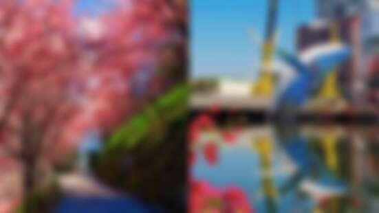 連假去哪玩?全台走春、賞櫻7大最新景點懶人包,粉嫩櫻花仙境、15公尺高鯨魚美翻