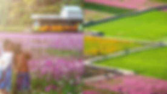 【台中景點】秘境「外埔忘憂谷」好紓壓!20公頃花海成天然畫布,黃金稻浪、粉色波斯菊四季都美呆