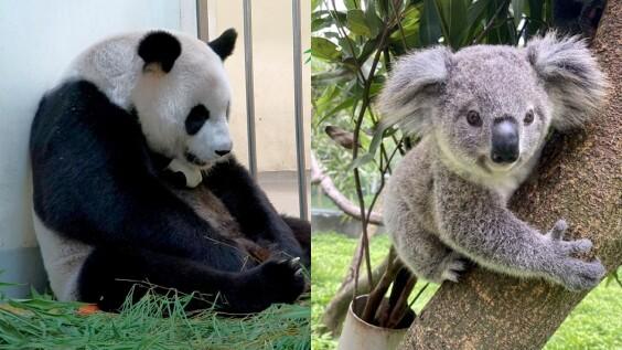 台北市立動物園開放夜間參觀!8月只有這五天,延長時間、票價、暑期限定活動一次看