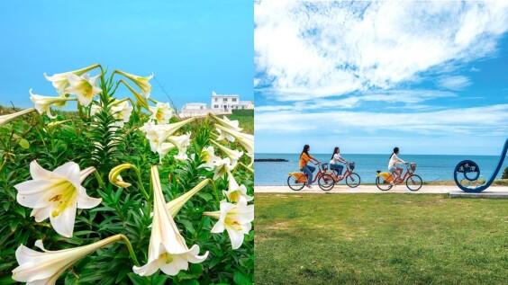 雪白野百合讓北海岸變更美了!6大絕佳「賞花地圖」公開,大推騎單車前往,海浪、金黃夕陽一次收