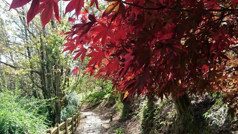 秋季楓葉飄飄美!北、中、南5個賞楓秘境去過沒