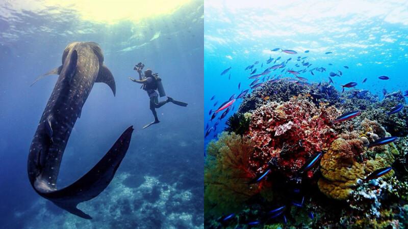 和鯨鯊、海龜共舞太感人!菲律賓蘇祿海「圖巴塔群礁」這一生絕對不能錯過的深海之旅~