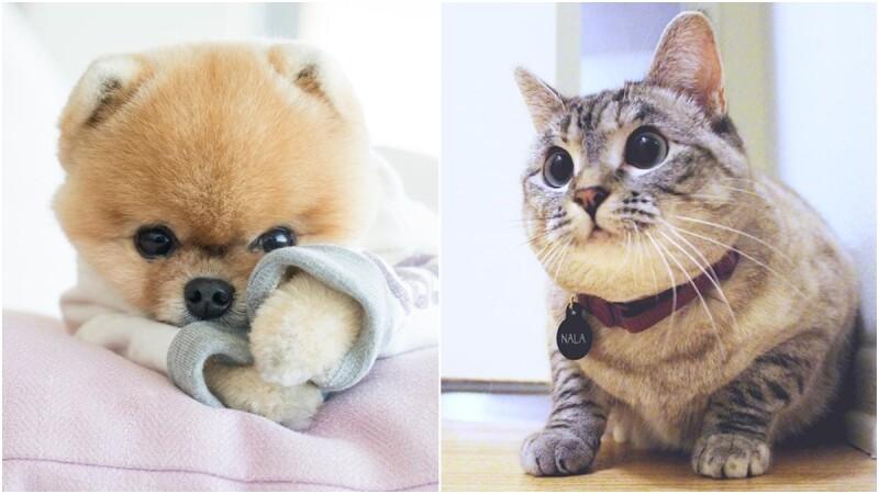 現在最流行的「寵物網紅」你追蹤了嗎? 這些寵物在IG都有藍勾勾!