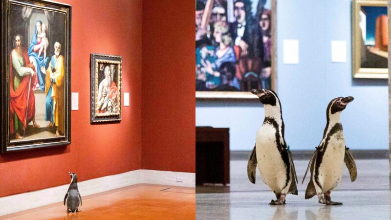 超可愛!三隻企鵝攜手逛美術館,東逛逛西晃晃,超萌模樣融化你的心