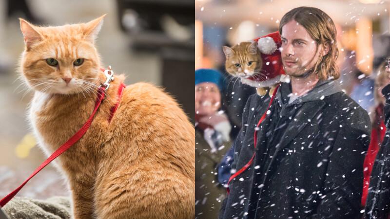 《再見街貓BOB》改編真貓真事!全球最紅街貓「BOB」最後身影,2020最溫馨的人貓情誼