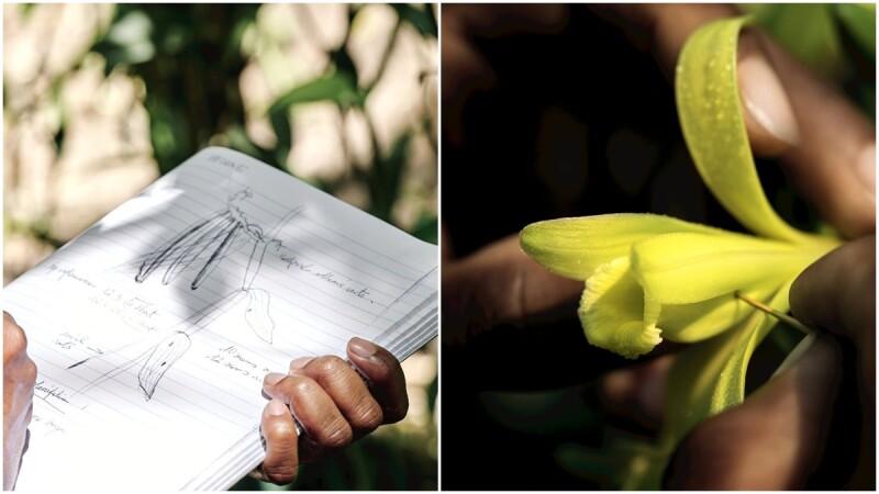 香奈兒用「這個動作」改變了香水業傳統常規,成就了今日N°5香水,最自豪的「植物與環境工法」更是以此為起點