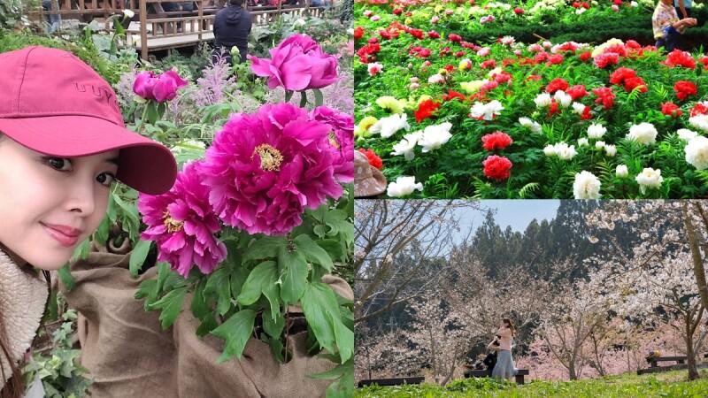 蔡依林也瘋狂!全台獨家牡丹花季、紫藤花、櫻花5大景點總整理,快跟著天后腳步拍美照、沐浴大自然中
