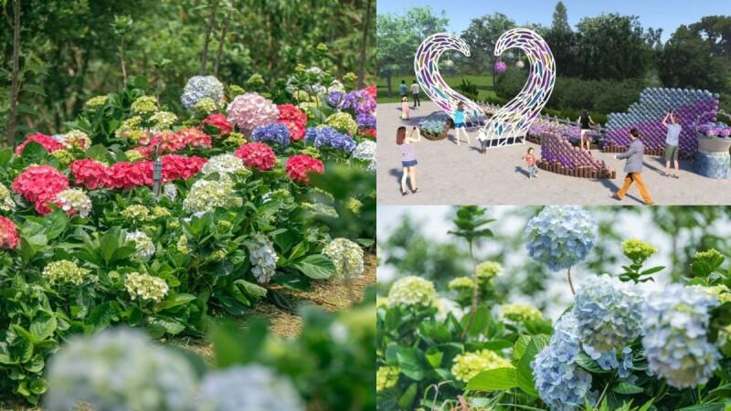 桃園也有繡球花園可朝聖!2021桃園繡球花季萬株花朵綻放、只展出43天,接駁車、交通資訊一次看