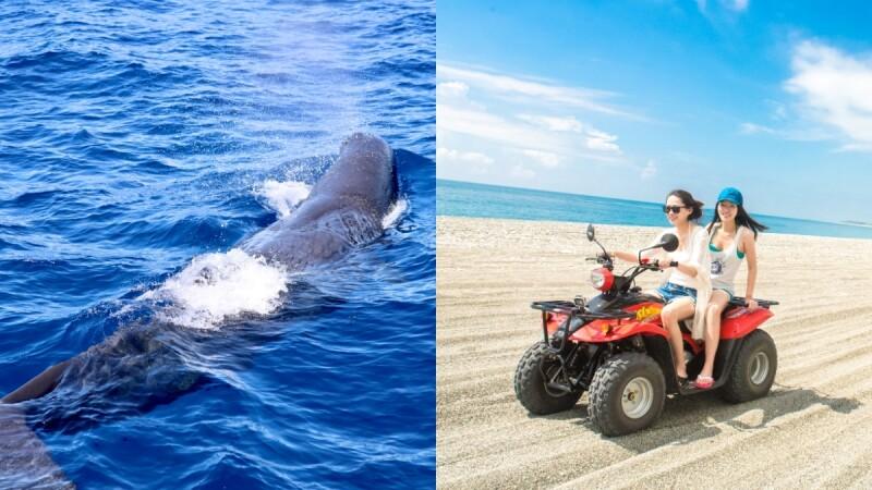 出海解悶去!太魯閣晶英酒店推「遊艇賞鯨」行程,2小時飽覽花蓮海洋生態,還能騎乘沙灘車賞清水斷崖