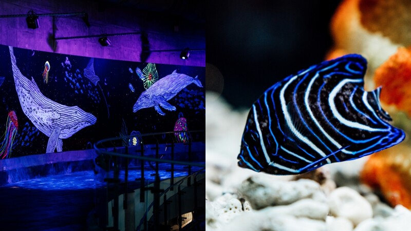 20公尺長「螢光廊道」夢幻登場!屏東海生館打造全新網美打卡牆,還能與鯨共舞、看珊瑚礁幼魚悠游