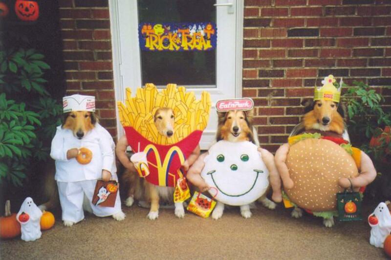 不給糖就要搗蛋,最療癒人心的寵物裝扮,快都來敲我家的門吧~