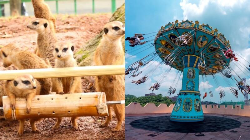 2020兒童節5大遊樂園活動總整理!全台最大動物派對、10萬株薰衣草花海、12歲以下免費入場...快去紓壓一波