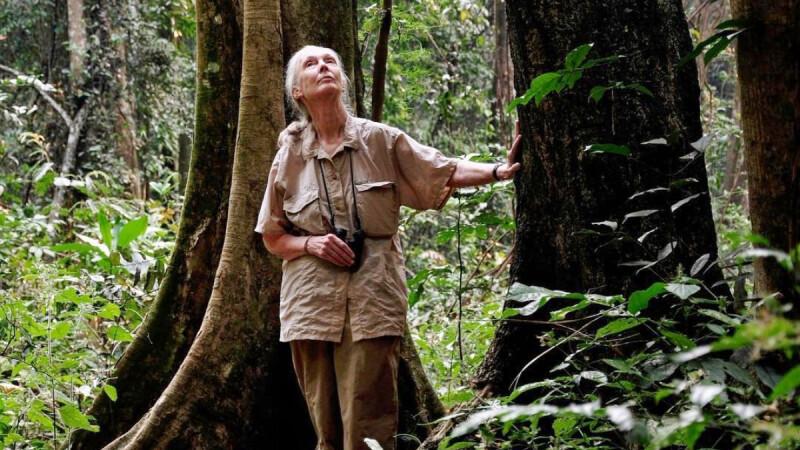 《珍古德:點燃希望》專訪Jane Goodall:「我現在86歲了,仍然有更多事情要做!」